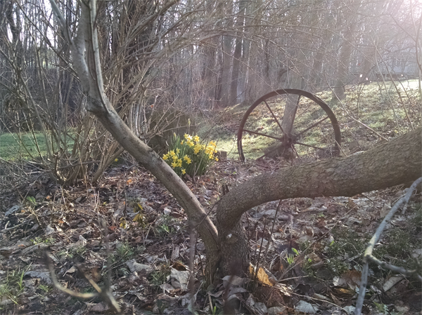 Spring Wheel by Dianne Kellogg, photograph, 2015